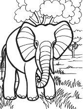 słoń.png