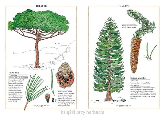drzewa1.png