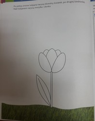Galeria 15.06.2020 Motylki